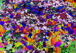 Psychedelic colours flowers fine art photography for interior design